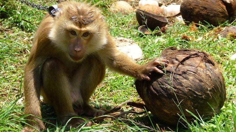 dünya maymun günü